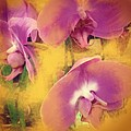 Orchid Dream by Go Inspire Beauty