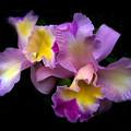 Orchid Embrace by Jessica Jenney