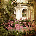 Orchid Exhibition by Jessica Jenney