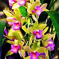 Orchid Flower Bunch by Susanna Katherine
