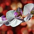 Orchid Flower Photographic Art by David Dehner