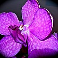 Orchid From Art Gallery by Randy Rosenberger