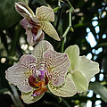 Orchid by Gary Rieks