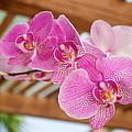 Orchid by Genaro Rojas