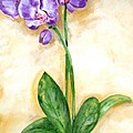 Orchid by Graciela Castro