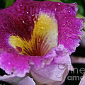 Orchid Heart And Soul by Susan Herber