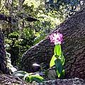 Orchid In Tree 2 by Barbie Corbett-Newmin