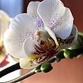 Orchid by Jennifer Wheatley Wolf