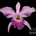 Orchid by John Zawacki
