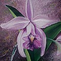 Orchid Lalia by Karin  Dawn Kelshall- Best