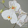 Orchid by Leigh Banks