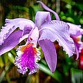 Orchid Life by John Haldane