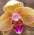 Orchid On Marble by Barbie Corbett-Newmin