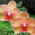 Orchid Pair by Duane McCullough