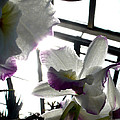 Orchid Series 4 by Katy Hawk