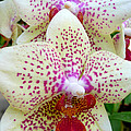 Orchid Series 5 by Katy Hawk