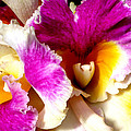 Orchid Series 6 by Katy Hawk