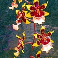 Orchid Spray By Pottery  by Barbie Corbett-Newmin