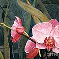 Orchid Trio by Barbara Jewell
