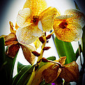 Orchid Vignette by Robert Storost