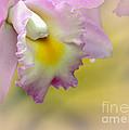 Orchid Whisper by Sabrina L Ryan