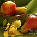 Orchid With Pears by Jacklyn Duryea Fraizer