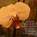 Orchid With Verse by Debbie Portwood