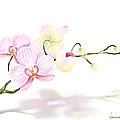 Orchidea by Veronica Minozzi