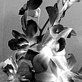 Orchids 2 Bw by Barbara Griffin