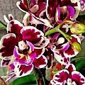 Orchids 21 by Ron Kandt