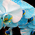 Orchids 3 by Julie Palencia