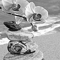 Orchids And Pebbles On The Sand In Black And White by Gill Billington