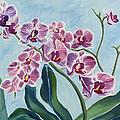 Orchids by Annette M Stevenson