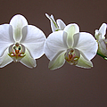 Orchids Illuminated by Juergen Roth