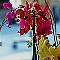 Orchids In A Window by Joseph Coulombe