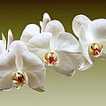 Orchids In Green by Bruce Bain