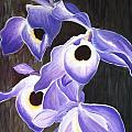 Orchids In Tewantin by Vicki Watson