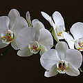 Orchids by Juergen Roth