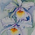 Orchids by Jyotika Shroff