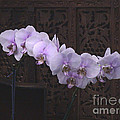 Orchids Loretta by The Art of Alice Terrill
