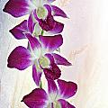 Orchids by Paul Fell