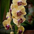 Orchids Pictures 10 by World Wildlife Photography