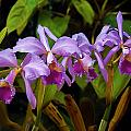 Orchids Too by Herb Paynter