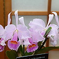 Orchids - Us Botanic Garden - 011315 by DC Photographer