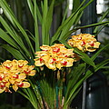 Orchids - Us Botanic Garden - 01137 by DC Photographer