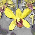 Orchids With Oil Slick Pattern by Carole-Anne Fooks