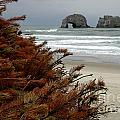 Oregon Beach by Mike Nellums