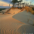 Oregon Dunes National Recreation Area Oregon by Dave Welling