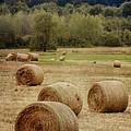 Oregon Hay Bales by Carol Leigh