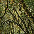 Oregon Rainforest Green by Adam Jewell